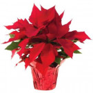 1.5 qt. Live Poinsettia (In-Store Only)-10024_UM 205688895